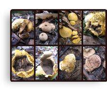 Puffball Fungi Canvas Print