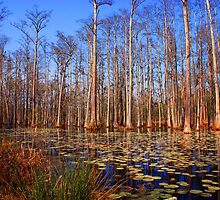 Trees in the swamp of Cypress Gardens SC by Susanne Van Hulst