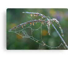 Dew Covered Web on Big Blue Stem Canvas Print