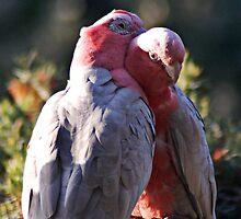 Cuddle Up A Little Closer by Eve Parry