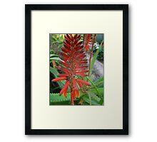 Glass Aloe Spike Framed Print