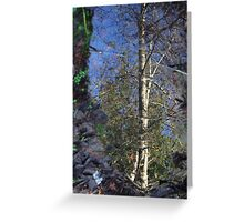 tree in reflection Greeting Card