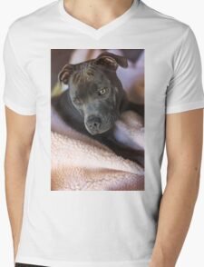 Pure Blue Staffy Mens V-Neck T-Shirt