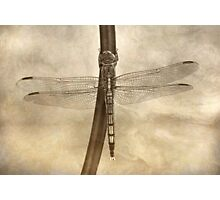 The Dragonfly Photographic Print
