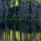 Winter reflections. Wairarapa, North Island, New Zealand by Fineli