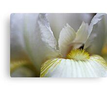 White Iris - Close Up Canvas Print