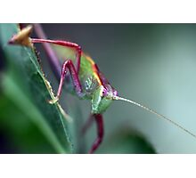 Grasshopper on Leaf Photographic Print
