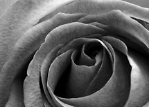 Beauty without colour by Ray Clarke