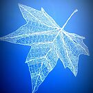 blue leaf art by cathyjacobs