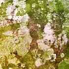 Wintergreen by Kathie Nichols