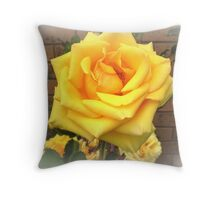 A Rose by any other name - Freesia, Spring 2009  Throw Pillow