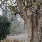 Tree by mechelle853