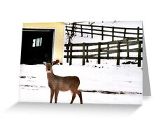 Look Who Came to My Window! Greeting Card