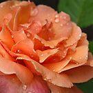 Simply Gorgeous by Lynn Gedeon
