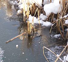 Ripples in Ice .. A Winters Day by LoneAngel