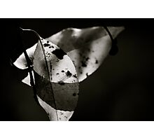 Leaves in Light & Shadow Photographic Print