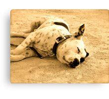 sleeping dog ibiza Canvas Print