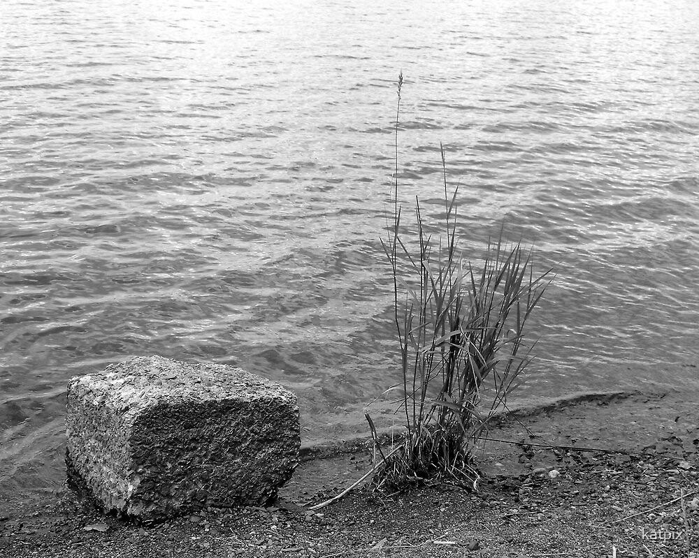 Grass by Rock by katpix