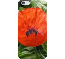 Amongst the green there is a Red Poppy iPhone Case/Skin