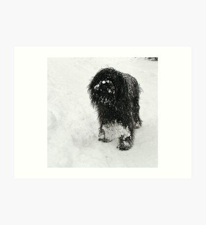 Samson in the snow Art Print