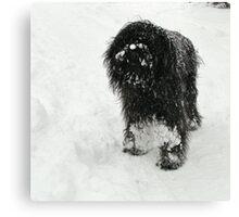 Samson in the snow Canvas Print