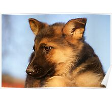GSD Puppy Poster