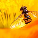 Yellow And Orange by timpr