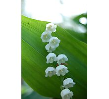 White Bells in the Green of Diamond Hill Photographic Print