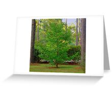 Mother's Front Yard Tree Greeting Card