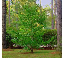 Mother's Front Yard Tree Photographic Print