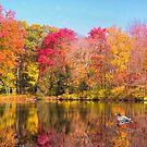 Mallard Duck In Autumn Pond by daphsam