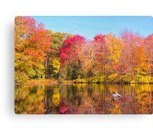 Mallard Duck In Autumn Pond Canvas Print