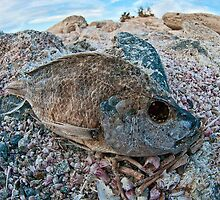 Dehydrated on the Salton Sea by toby snelgrove  IPA