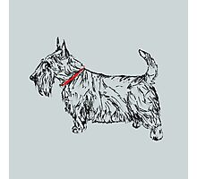 Pen & Ink Scottie Photographic Print
