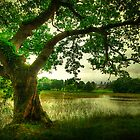 Lake Tree - Emo Court by Gerry Chaney