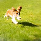 Run Puppy Run by daphsam