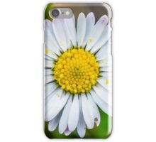 Daisy in a Kentish garden - Square Photo iPhone Case/Skin