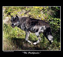 """The Pathfinder"" Grey Wolf Photography by Val  Brackenridge"