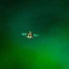 Caught in mid-flight by NaturesEarth