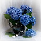 Blue Hydrangea by Nancy Bray