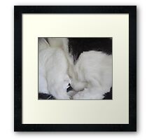 Dottie in the Round Framed Print