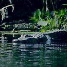 Alligator by MMerritt