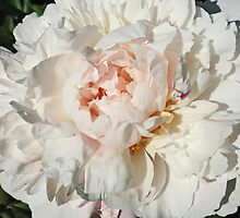 My Favorite Peony by Vickie Emms