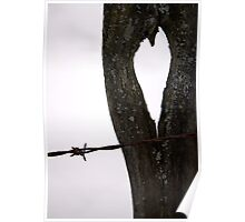 barbed wire kisses... Poster