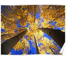 Yellow Forest Canopy Poster