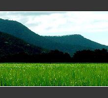 Sugar Cane by jamesdphoto