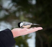 .....A Bird In The Hand........ by HALIFAXPHOTO