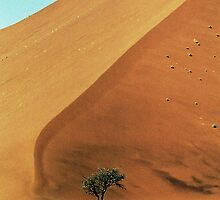 Dune & Tree by johnporter