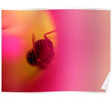 Insect Inside a Desert Rose Poster