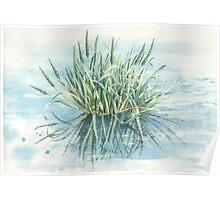 Water reeds, Royal Park Wetlands Poster
